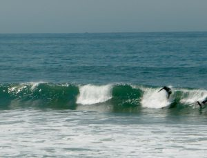 """""""Das ist die perfekte Welle..."""""""